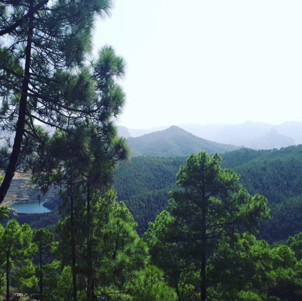 Tamadaba natural park